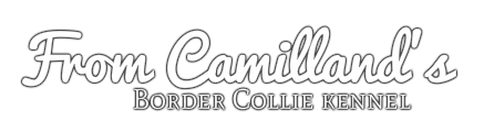 From Camilland's Border Collie kennel